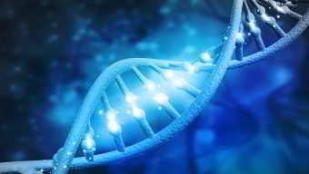 """""""GeneSeeker"""" <br></noscript> (Test de Compatibilité Génétique)"""